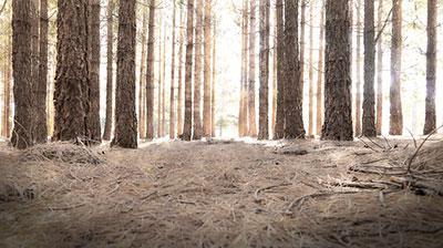 urban_legend_forest_image