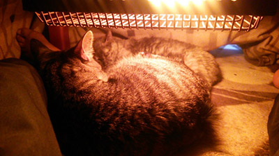 kotatsu_cat