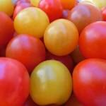 fruit_tomato_price